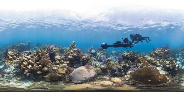 nature documentaries netflix : chasing coral