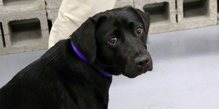 Lulu, ex-CIA dog