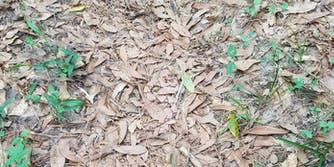 Can you spot the snake