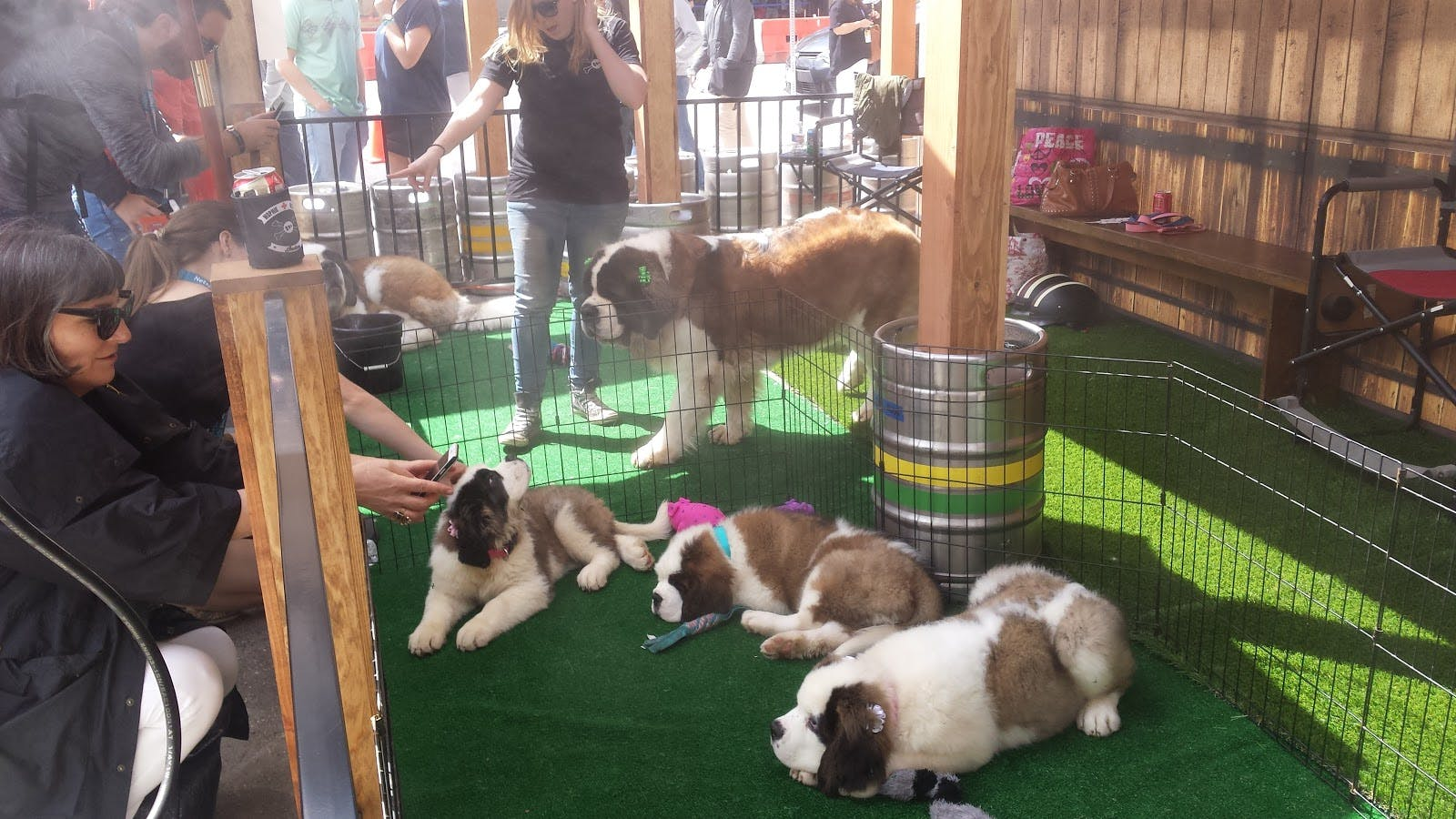 Puppy yard provided a cool place to relax away from the crowds.