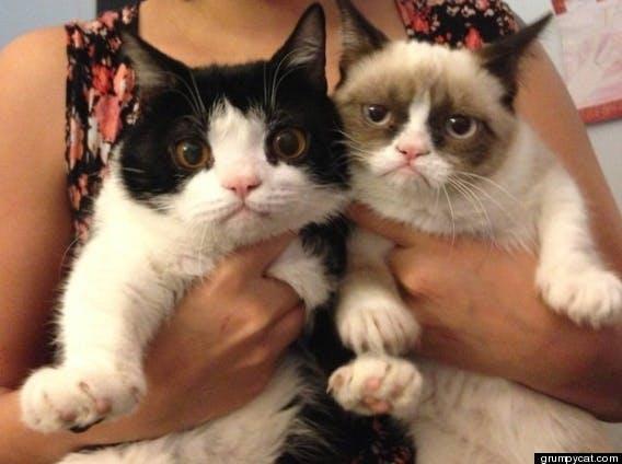 grumpy cat and pokey cat