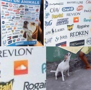 soundcloud animal testing meme dancing dog