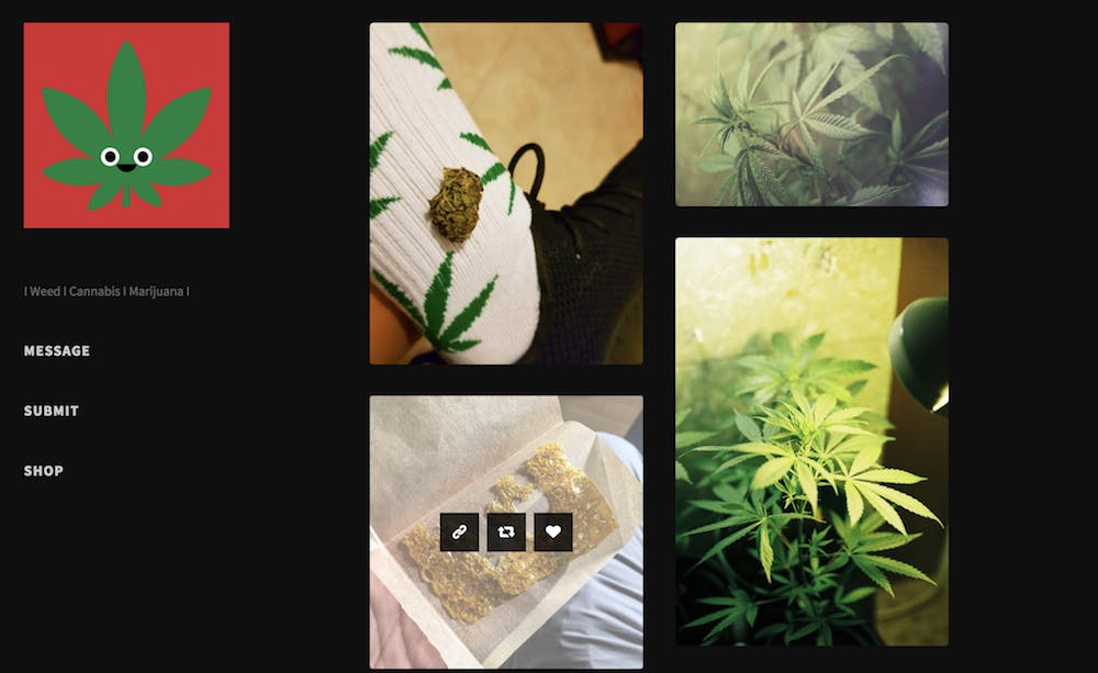 tumblr weed pics : Fastest Sloth Alive