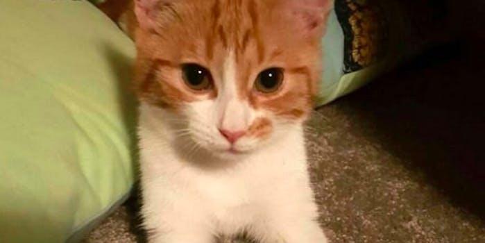 new zealand first cat