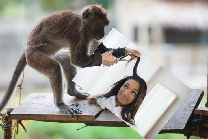 monkey haircut meme reversed
