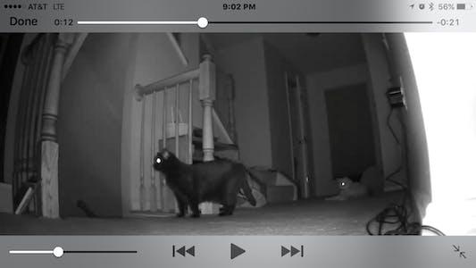 camera cats