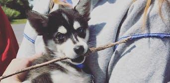 sophie turner puppy