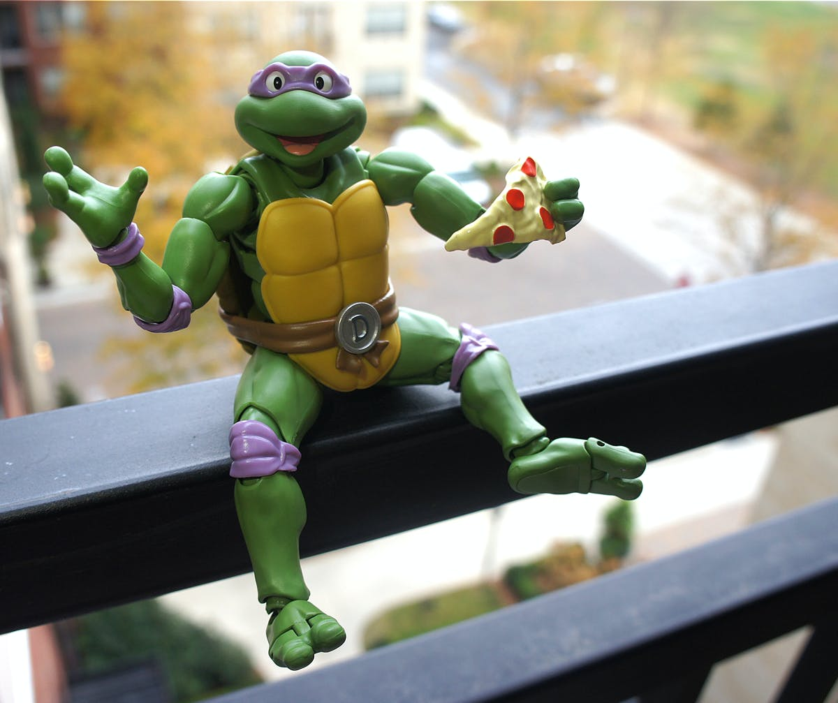 Me time is important for a hardworking turtle.
