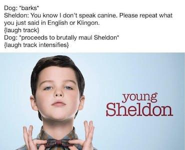 young sheldon meme dog attack