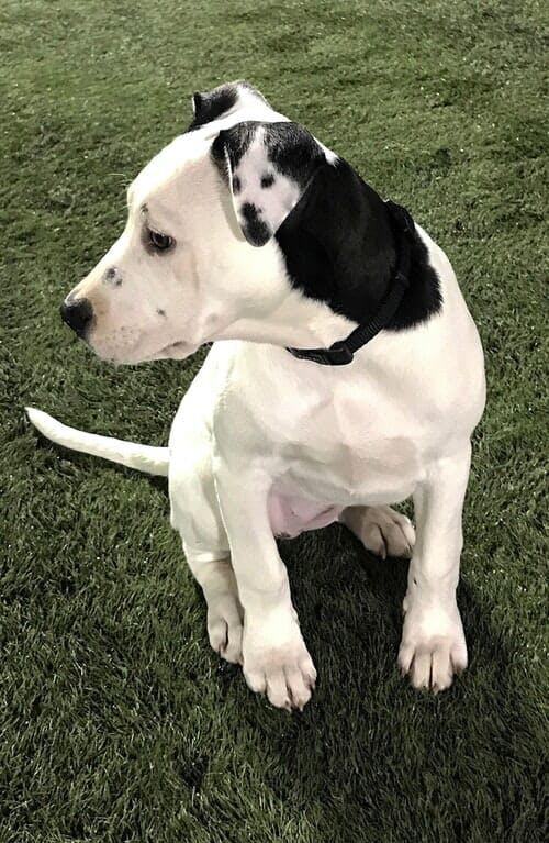 dog in dogs ear