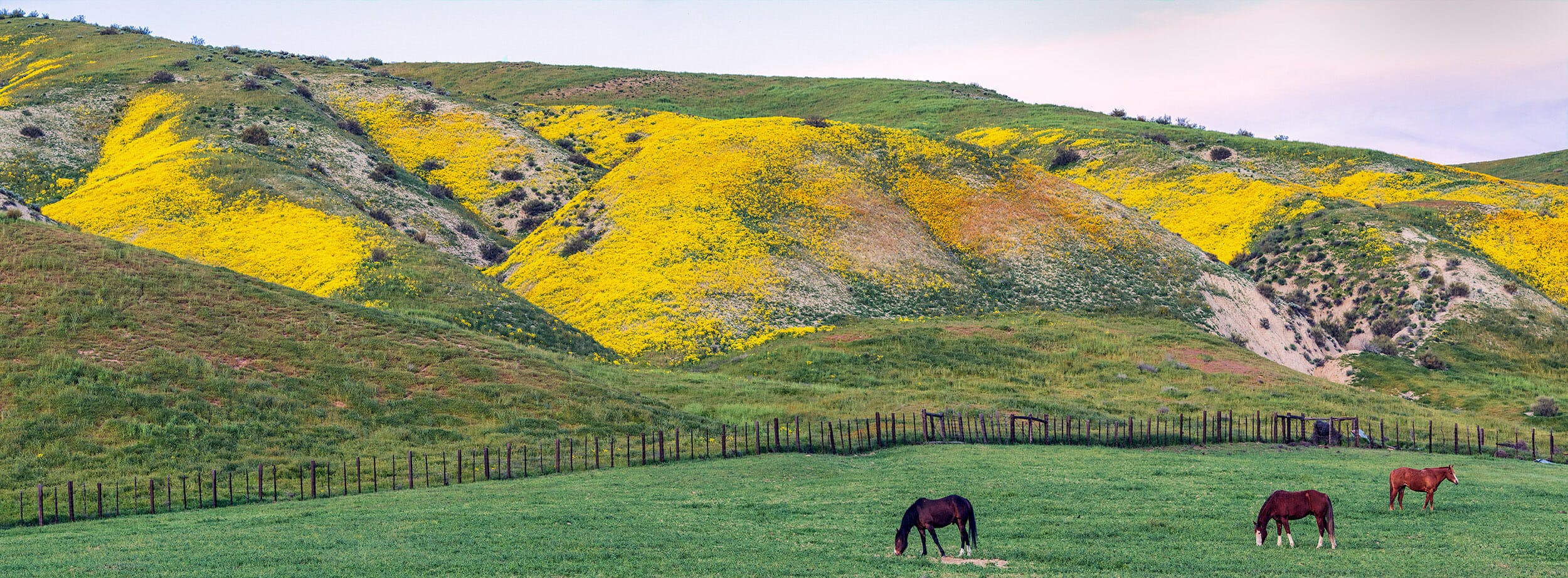 Land Almost Lost: Carrizo Plain National Monument