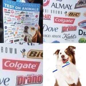dog brushing teeth colgate animal testing meme