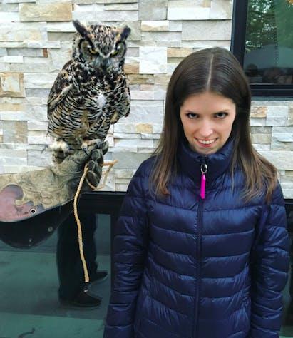 anna kendrick owl
