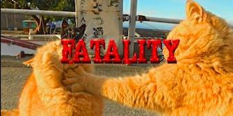 cat battle photoshop battle