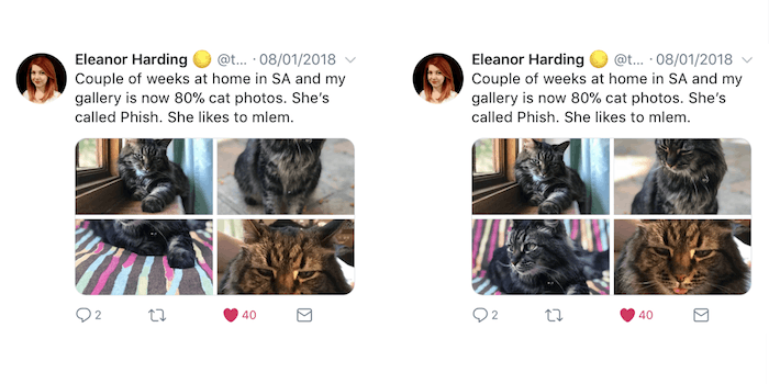 twitter image cropping before and after, with cat faces