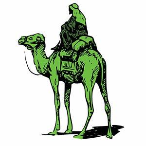 Silk Road camel