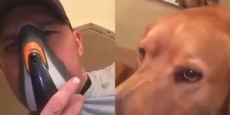 Tom Hardy doing a Bane impression with his dog