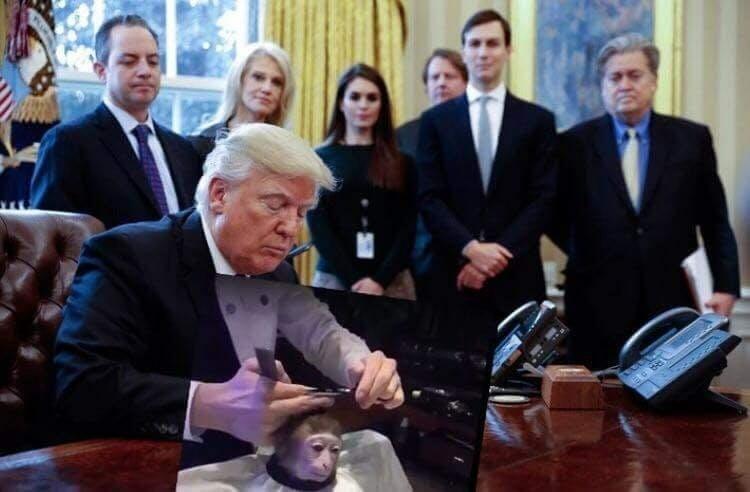 monkey haircut meme donald trump
