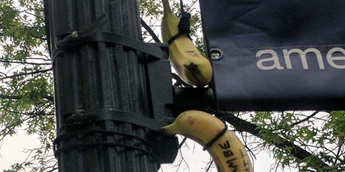 bananas american university