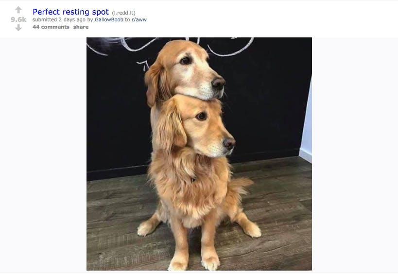 reddit celebrities : GallowBoob