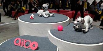 sony aido robot dog ces 2018 demo fail