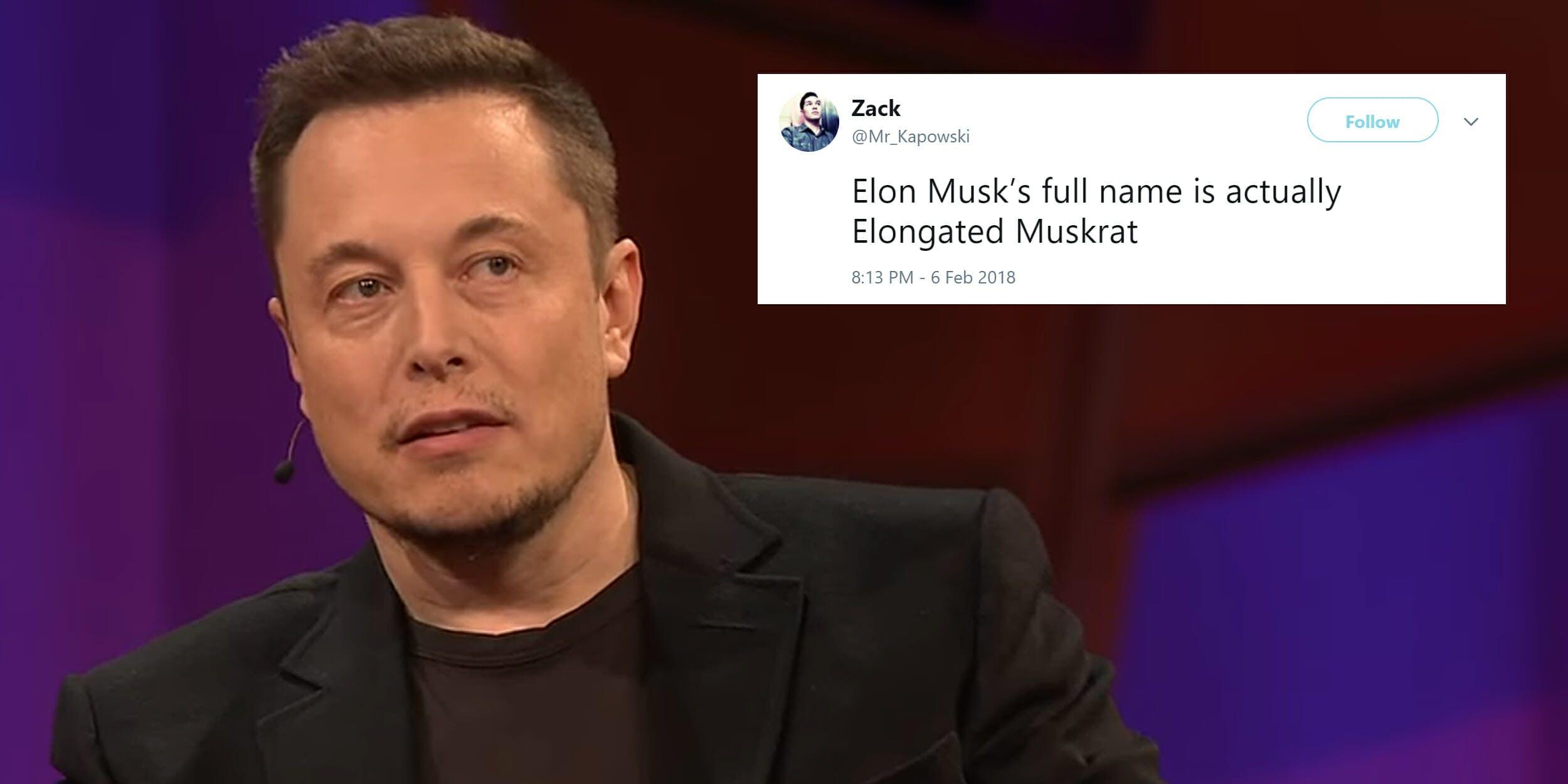 Elon Musk is actually named Elongated Muskrat meme
