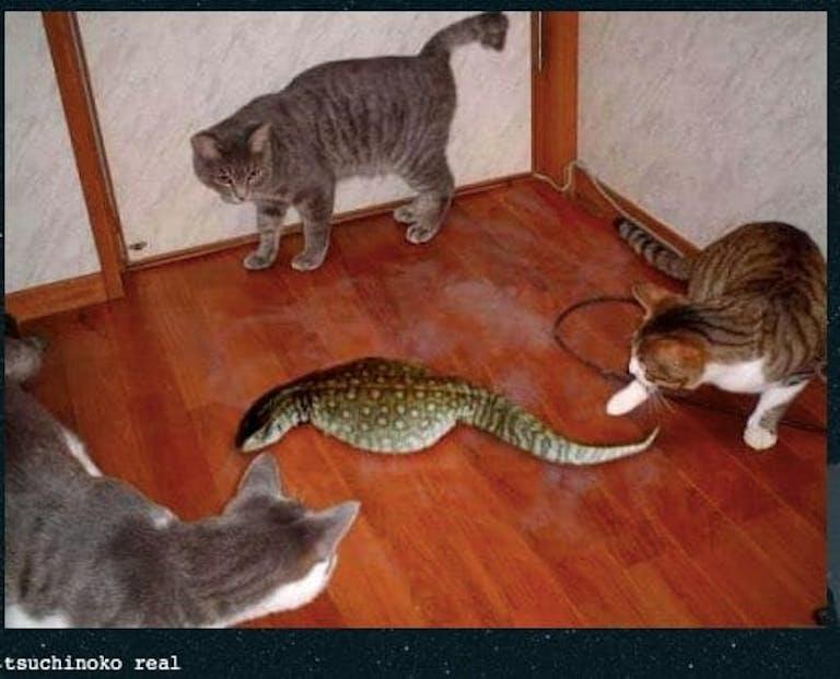 tsuchinoko real snake and cats meme